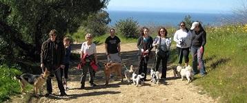 Canine Social Hikes - sbbj